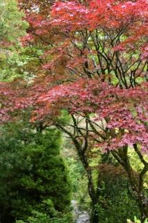 Muckross Estate - Gardens